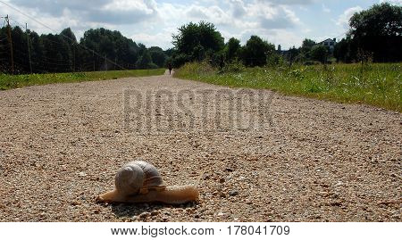 Snail crossing a long way for travelling a very long time