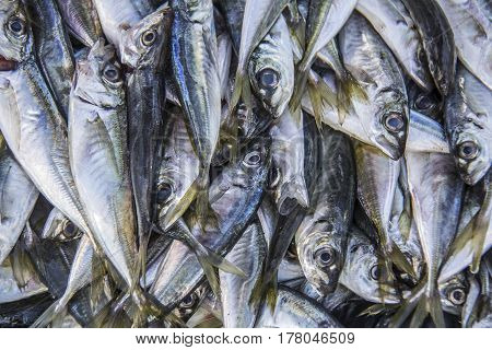 Fresh fish (anchovies) at the market, background textures