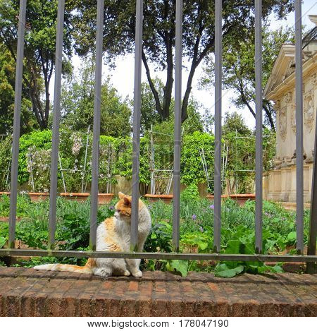 Orange and White Stray Cat in a Garden with Ancient Ruins