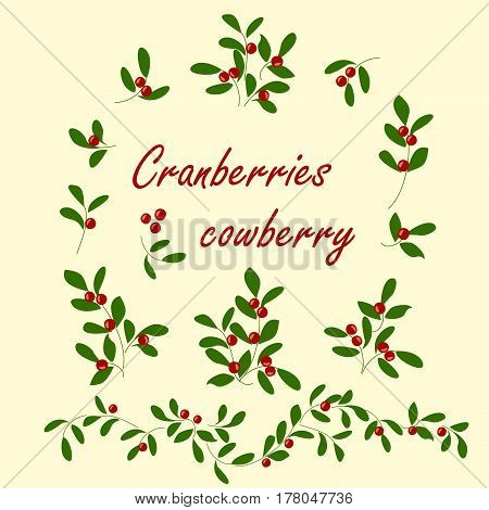 Berry colored icons set cranberries. Vector isolated sprigs with leaves and berries.