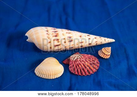 Sea Themed Composition: Shells On Blue Material Fabric Background