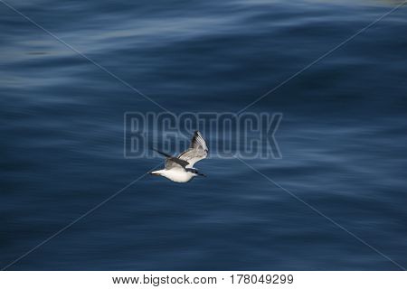 white Seagull flying over the blue sea.