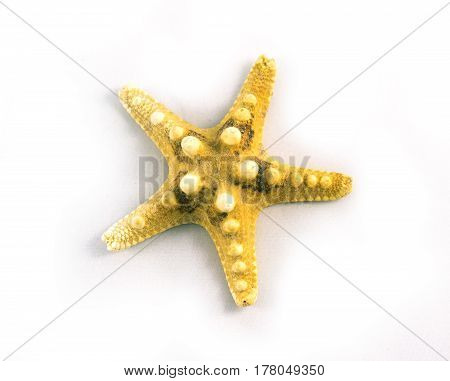 Sea Themed Simple Composition: Starfishes And Seashells On White