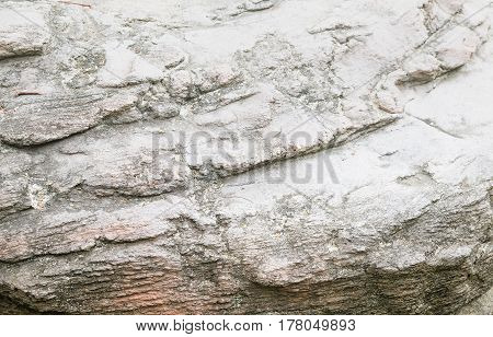 Wood texture. stone texturel. Wooden background pattern. Showing growth rings