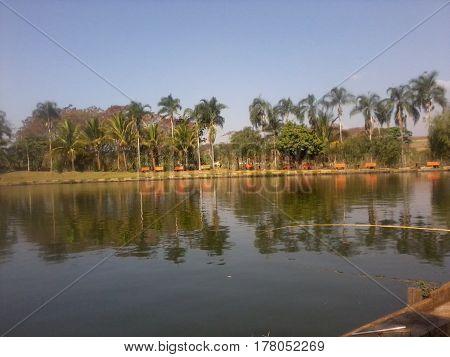 um lago com muito pé de coqueiro.