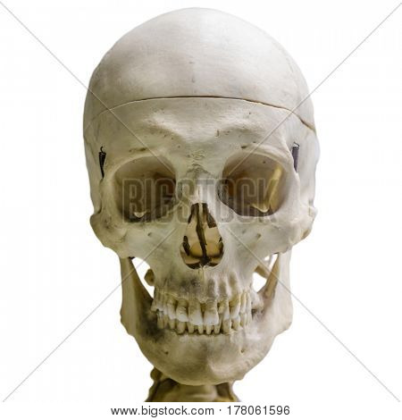 Human skull, isolated on white background