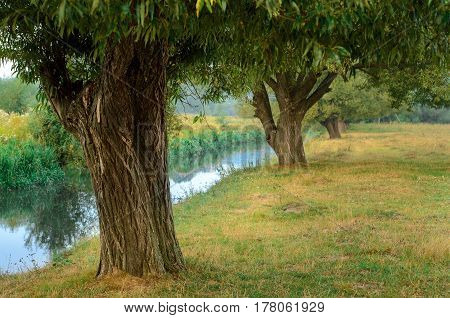 Tree Near The Water Of River