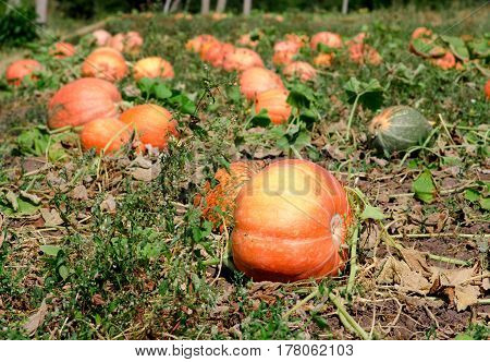 Pumpkins On A Field Under A Great Cloudscape.
