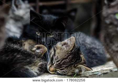 Small Kittens Resting Outdoors At Summer Day