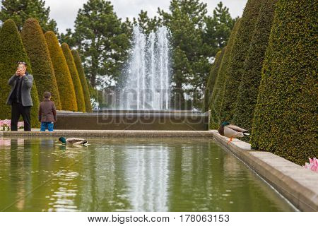 Lisse Netherlands - May 7 2016: Father with a child in the Keukenhof park looks at the ducks swimming in the pond. A man takes pictures of ducks in a pond. The child is looking at the fountain.