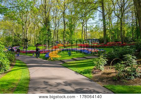Lisse Netherlands - May 7 2016: Flower bed of colourful tulips in spring. Colorful tulips in the Keukenhof garden Holland Netherlands. Fresh blooming tulips in the spring garden. Tulip Flower Field