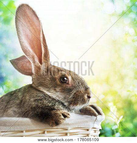 Grey Rabbit In Basket On Spring Easter Background