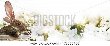 Easter Grey Rabbit White Basket. Blossoming Background