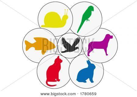Multi Animal