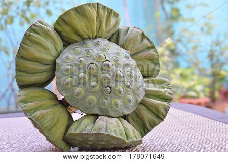 lotus seed in pod on bamboo mat in garden