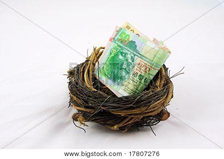 Hongkong dollor in nest
