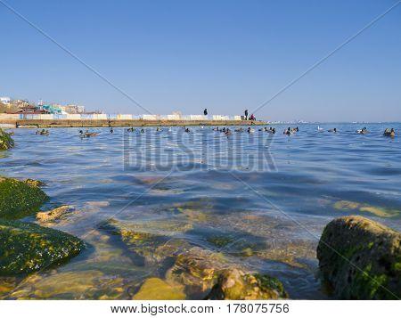 The nice seagulls and cute ducks on the Black sea