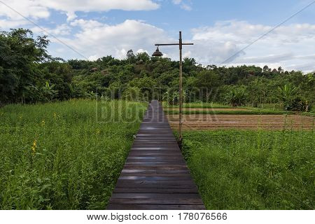 Wooden walking path leading over rice field natural landscape background