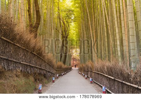 Walking way leading to bamboo forest Kyoto Japan