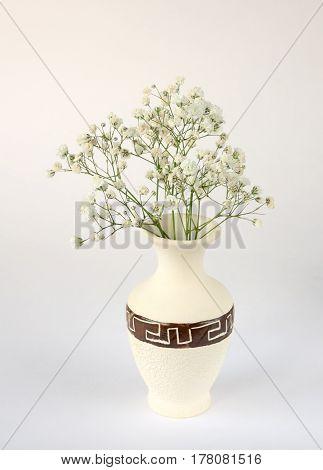 The gipsofila in a white vase on white