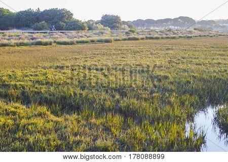 Biker riding by trails along Piedras river marshlands close to El Rompido Huelva Spain
