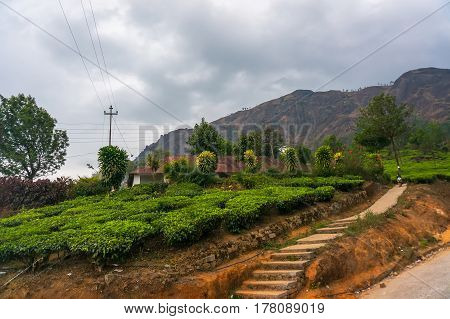 The Road To The Tea Plantation