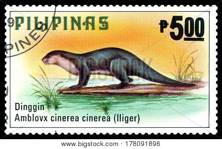 STAVROPOL RUSSIA - March 17 2017: A stamp printed by Philippines shows Asiatic Dwarf Otter Philippine animals circa 1979.