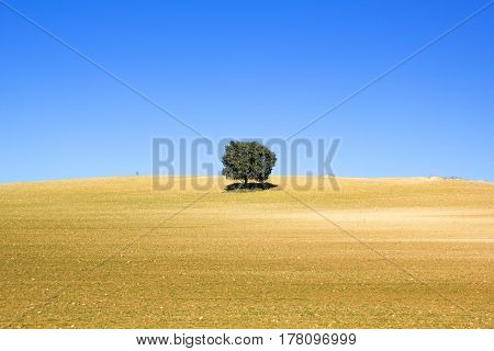Land Of Cereal With A Tree, Spain