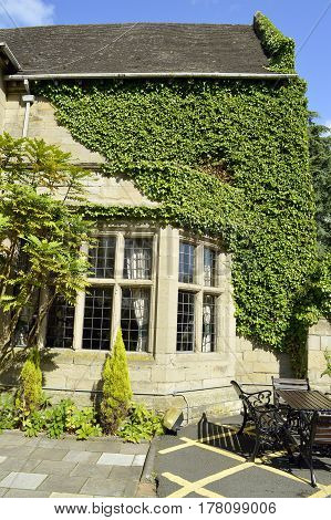 Bulkington Coventry Warwickshire England - August 17 2014 : Ivy growing on Weston Hall hotel in Warwickshire