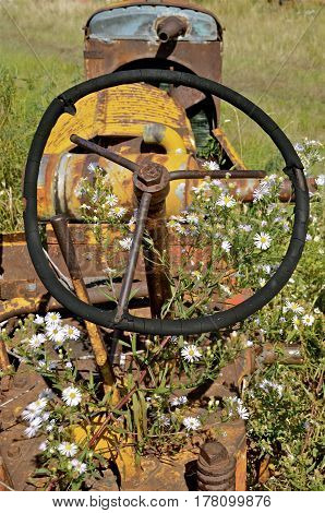 Blooming flowers and weeds grow around an old abandoned tractor with a bent steering wheel