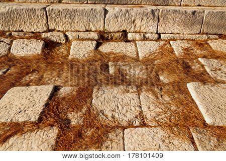Pine Needles    Ruins Stone And Theatre In  Antalya  Arykanda Turkey Asia