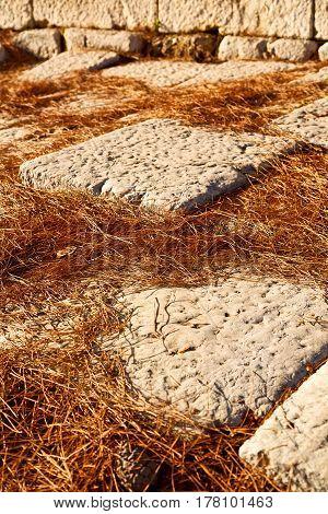 Pine Needles     Stone And   Arykanda Turkey Asia