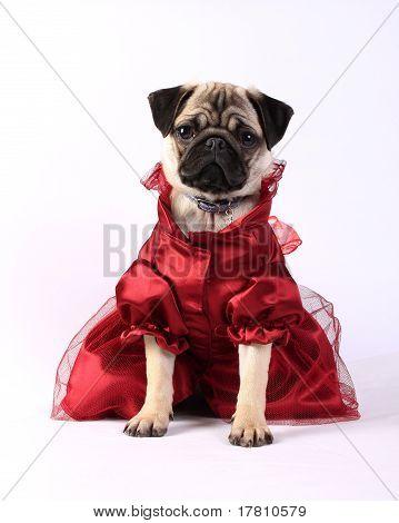 Lady Mops In Red Dress