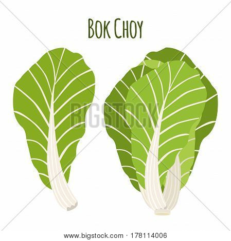 Bok choy, chinese cabbage in cartoon flat style. Natural organic vegetable.