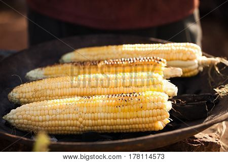 Four cobs of corn on the grill, on the coals