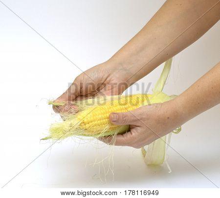 Person prepare corn for cooking, peel corn cob and remove corn silk from it