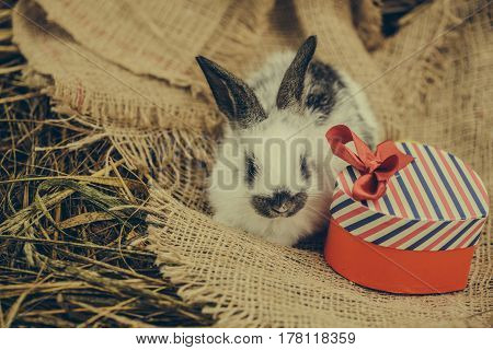 Cute Rabbit Lying With Red Heart Gift Box On Sackcloth