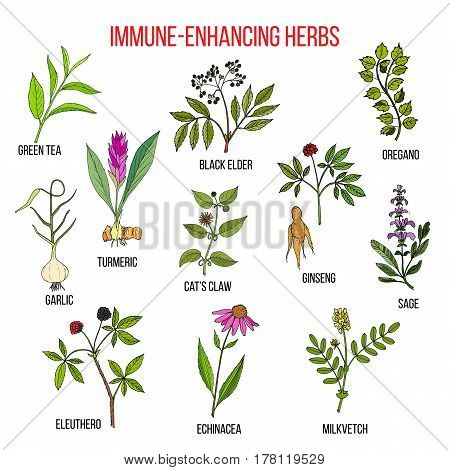 Immune Enhancing Herbs