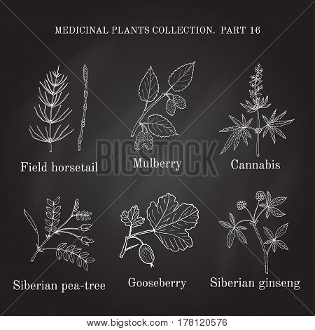 Vintage Collection Of Hand Drawn Medical Herbs And Plants,