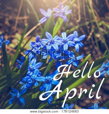 Hello April greeting card with blue first flowers in background