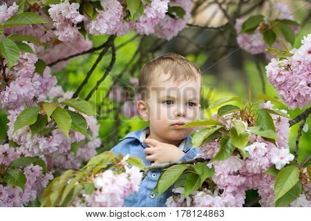 Cute baby boy little child with blond hair in blue shirt among pink blossoming flowers and green leaves on sunny spring or summer day outdoors on natural background