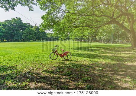 Bicycles in Public green park at Vachirabenjatas Park (Rot Fai Park) Bangkok, Thailand