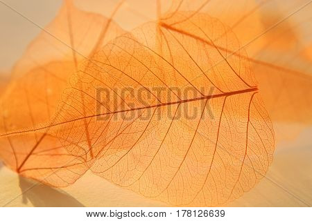 Dried transparent leaves. Beautiful nature pattern. Dried leaves texture. Dried florist supplies.