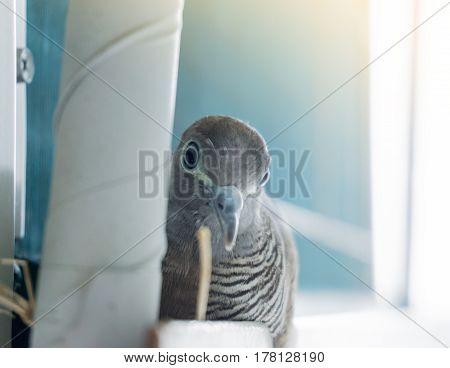 Birds nest near the air compressor in condominium.