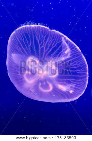 Jellyfish Floating Background