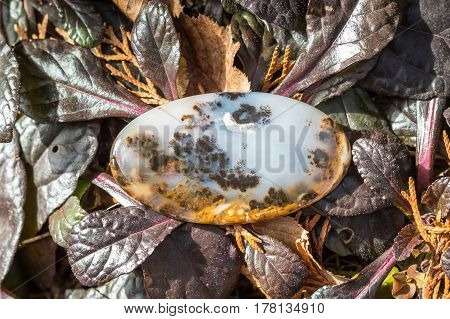 Macro close-up photography of natural gem stone moss agate lying on the dry dead yellow plants leaves and needles and burgundy leaves