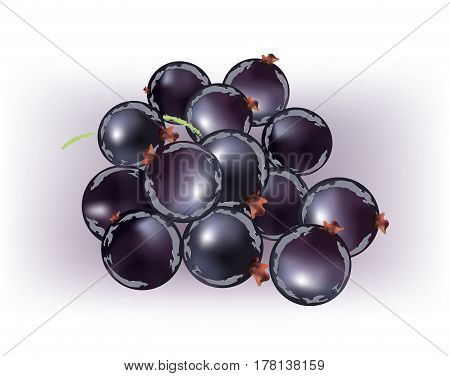 Group of abstract black currents on white background