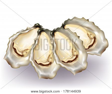 Group of delicious oysters on white background