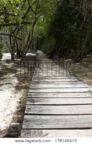 Wooden Path Through The Jungle Of Curieuse Island, Seychelles