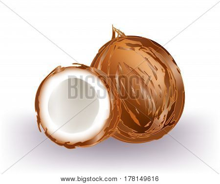 Complete coconut and half coconut on white background